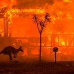 La historia detrás de la fotografía que mejor ilustró el drama de los incendios en Australia